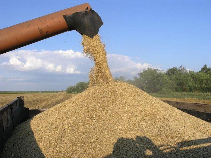 Фьючерсы на кукурузу поднялись на фоне падающего доллара и погоды в аргентине