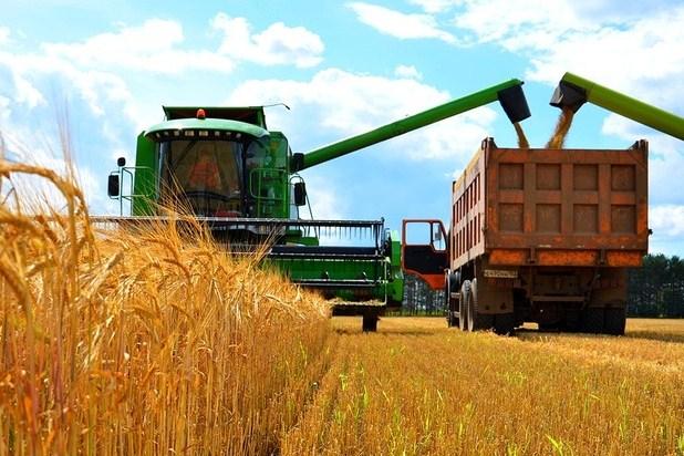 Фьючерсы на зерно дешевеют; кукуруза сша находится под давлением