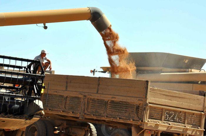 Экспортные цены на пшеницу рф растут, производители не спешат с продажами