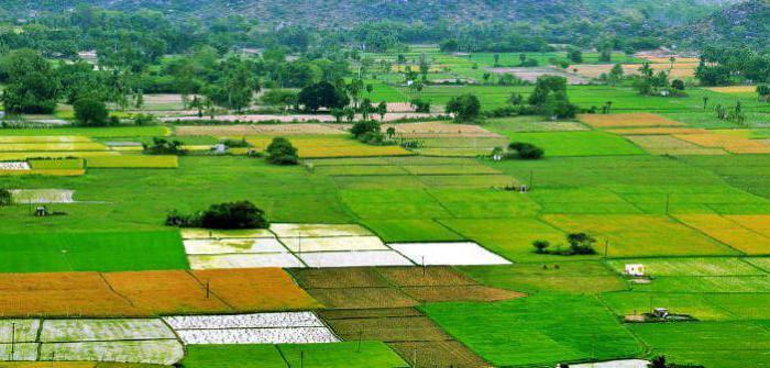 Как перевести землю из сельхозназначения (с/х) для строительства дома?
